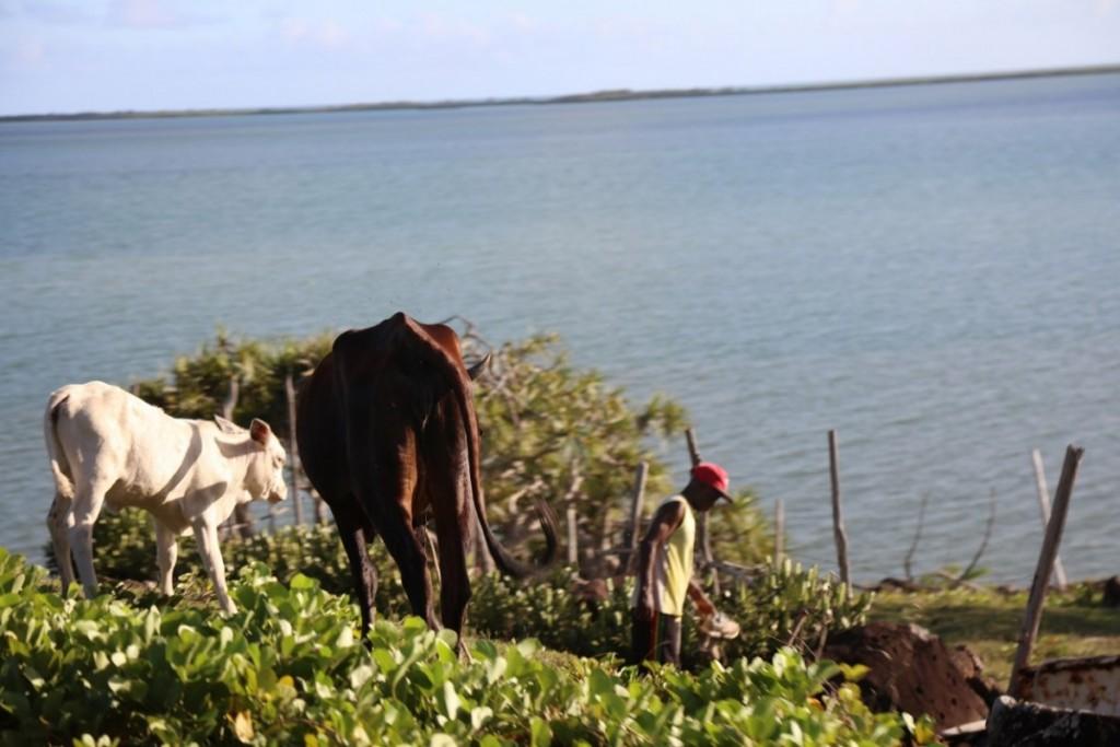 Les Rodriguais accordent une place importante à l,agriculture. Crédit photo: M. Garreau.
