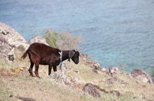 Article : Petite visite à l'Ile Rodrigues, princesse de l'océan Indien