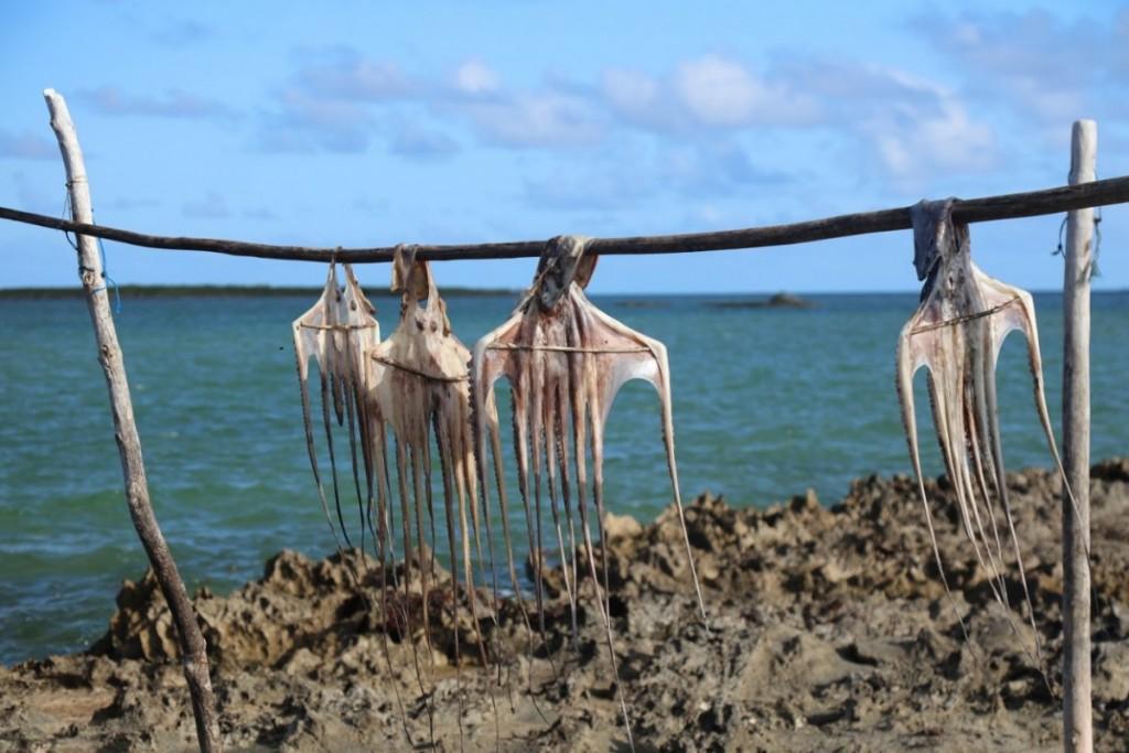 Un de mes gros gros pêchés mignons : le fameux ourite sec de Rodrigues! Crédit photo: M. Garreau.