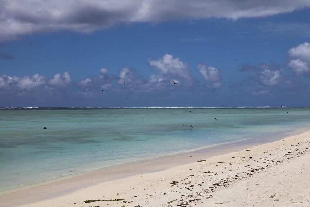 bird of paradise-rodrigues-ile aux cocos-ile maurice-mauritius-mondoblog